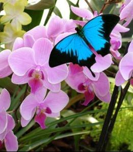 68_parc_jardin_des_papillons_hunawihr