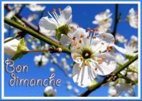 bon-dimanche-1-eb7536