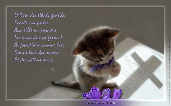 la-priere-du-chaton