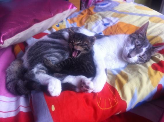 Pellicule blanche sur les poils de mon chaton photo chats forum animaux - Enlever les puces sur un chaton ...