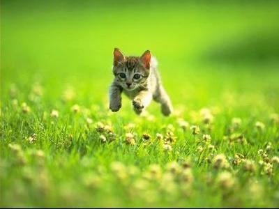 BB CAT