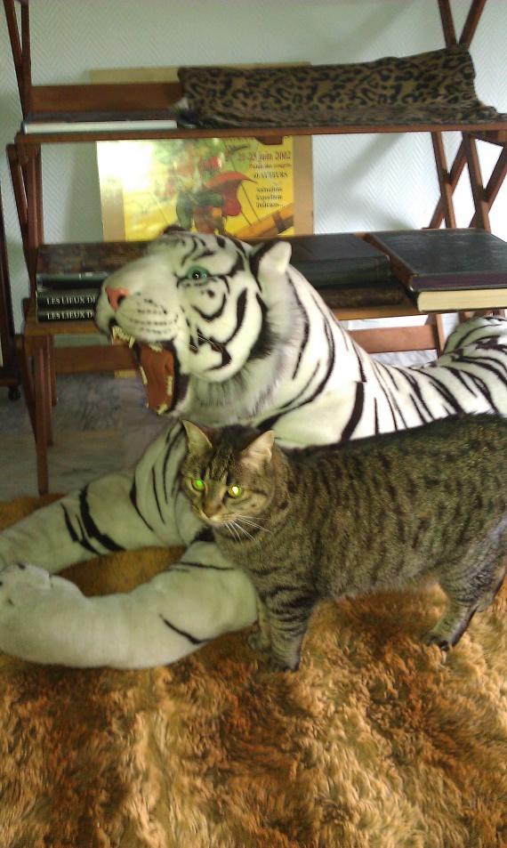 Les Tigres ......