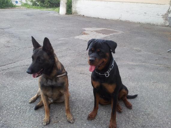 Fatale et Dork
