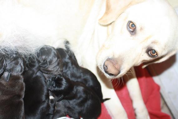 mont 233 e de lait de la chienne page 5 chiens forum animaux