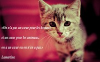 images-coeur-hommes-animaux-img