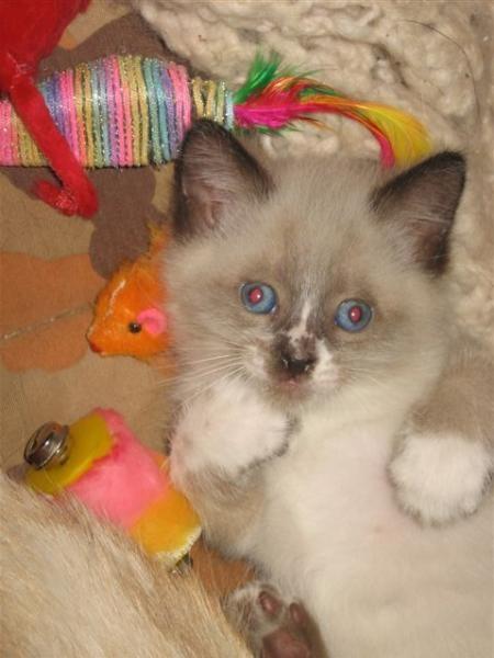 les chatons le 04 07 2008 014