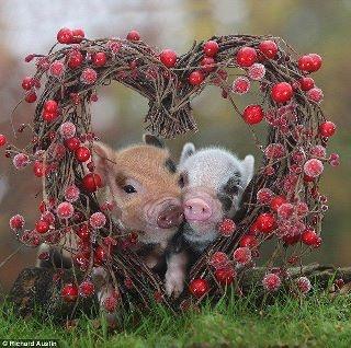 un peu de douceur et d'amour.....