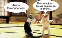chat-chat