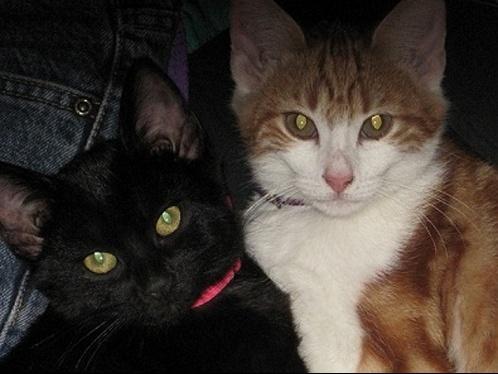 Titi et Mimi