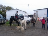 rodeo Pto Natales