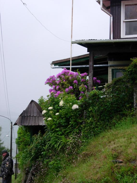 isla Niebla