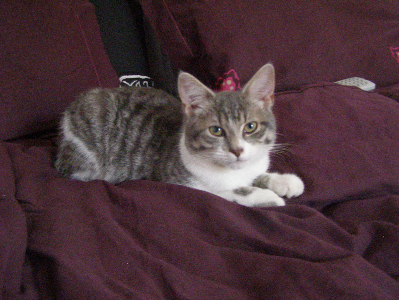 Chat Pisse Tapis Salle De Bain ~ mon chat fait pipi sur mon tapis chats forum animaux