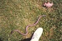 Serpent relâché