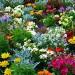 flower-garden-634578_960_720