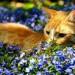 chat-plantes