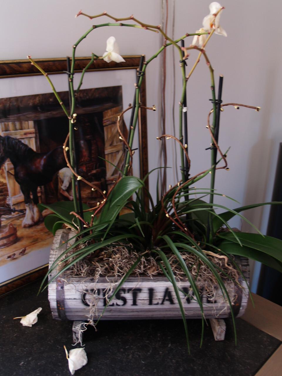 Comment S Occuper D Un Orchidée orchidée qui perd toutes ses fleurs.que faire?? - jardinage