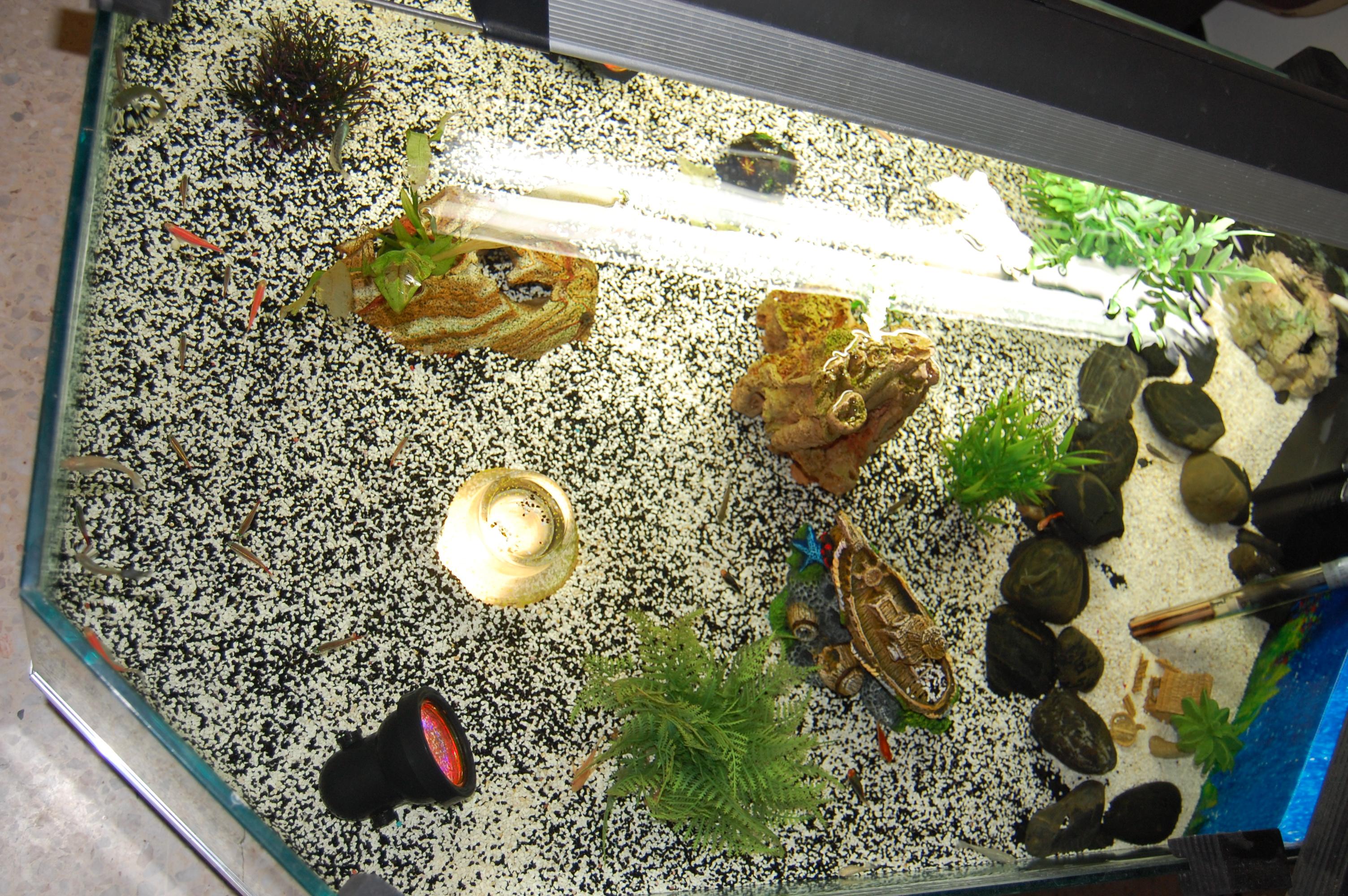 dsc 0015 table basse aquarium fait maison lol lynka83. Black Bedroom Furniture Sets. Home Design Ideas