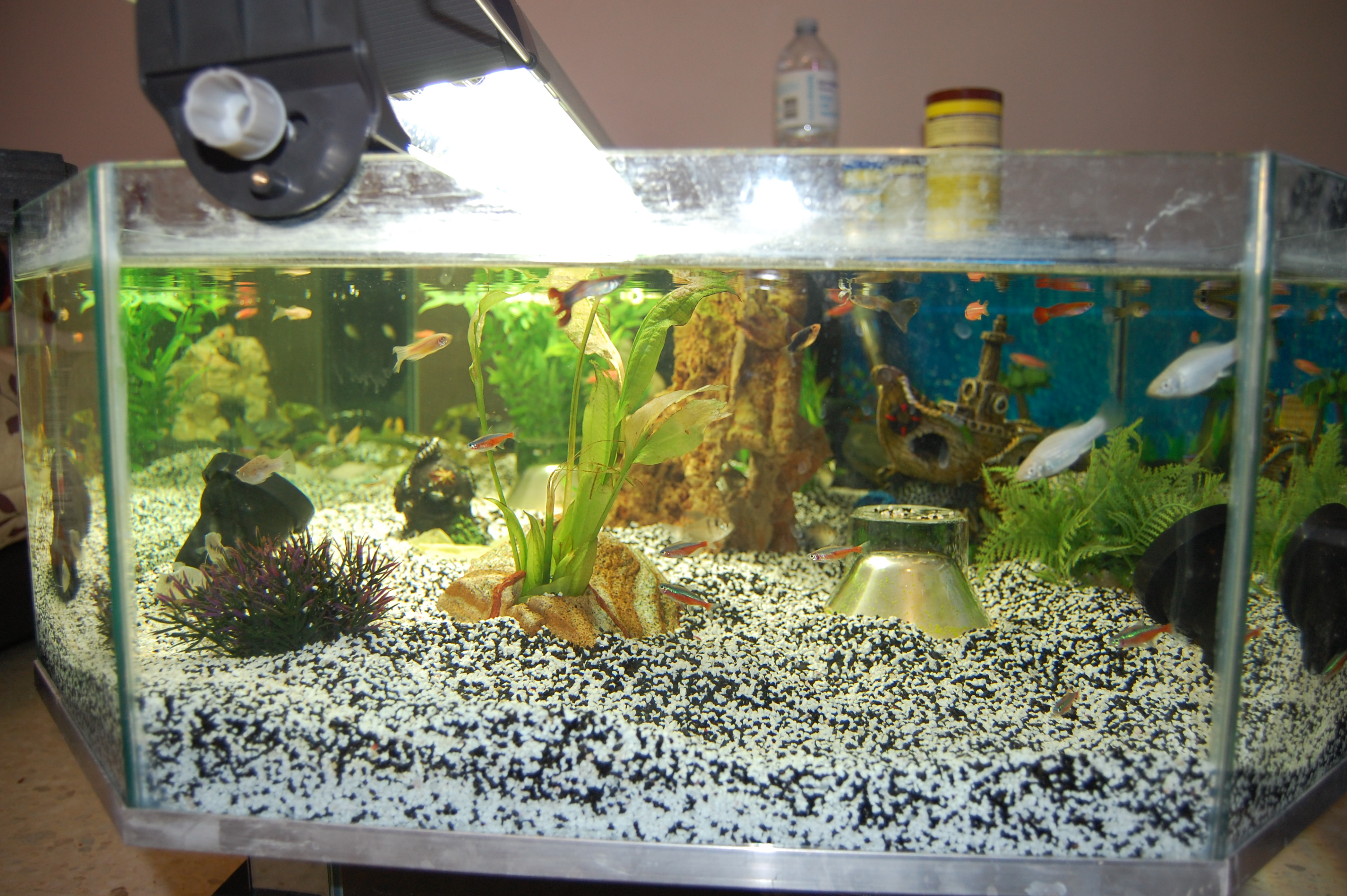 Dsc 0016 table basse aquarium fait maison lol lynka83 - Table basse faite maison ...