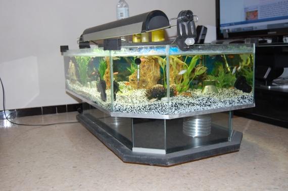 Dsc 0017 table basse aquarium fait maison lol lynka83 for Table de salon fait maison