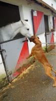 Le cheval c'est trop génial lol!!!