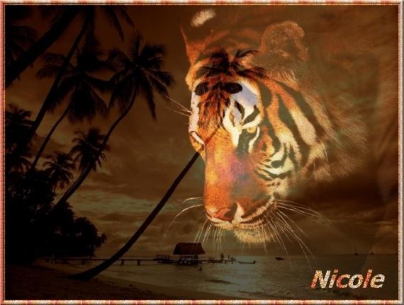 tigre nicole