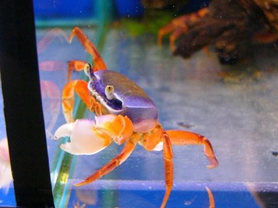 astuces pour nettoyer les d 233 cors aquariums et vivariums forum animaux