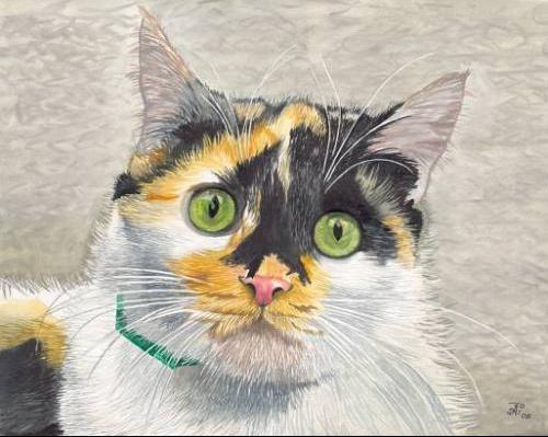 cat_860