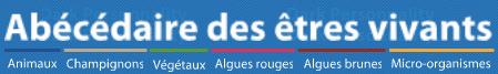 bannieres-docti-abecedaire-etres-vivants-big