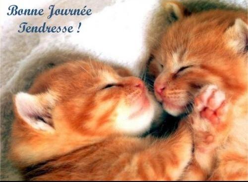 chatonsbnejournee-721510c78