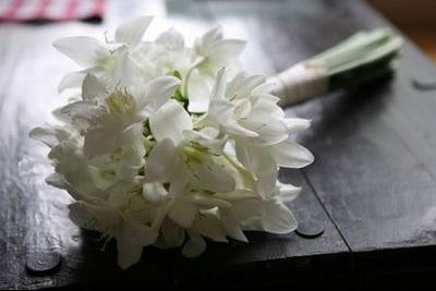 bouquet d'eucharis