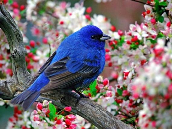 """Résultat de recherche d'images pour """"belle image d'oiseau bleu"""""""