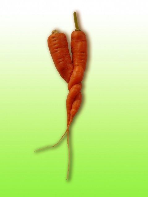Etreinte végétale