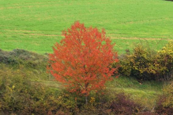 Un arbre qui défie le temps