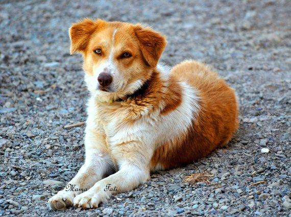 Louiza petite chienne abandonnée