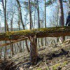 Femme assise sur un vieux tronc d'arbre cassé