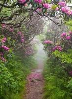 Chemin fleuri
