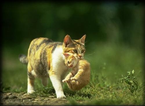 Ma collection de chats 0005