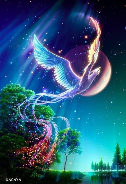 oiseau-paradis-162182c65