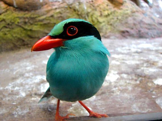 Oiseau couleurs oiseaux divers etoiledusoir photos for Oiseau par la couleur