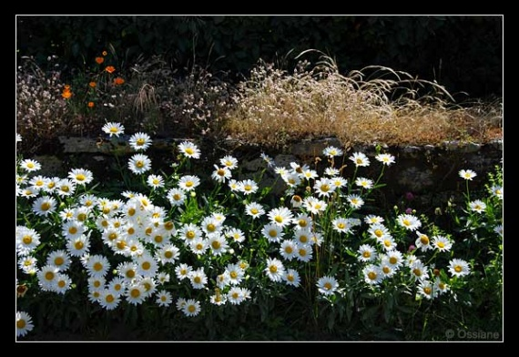 fleurs-coeurs-petit-frere-img