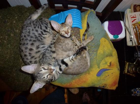 Marguerite et Philomène presque 5 mois