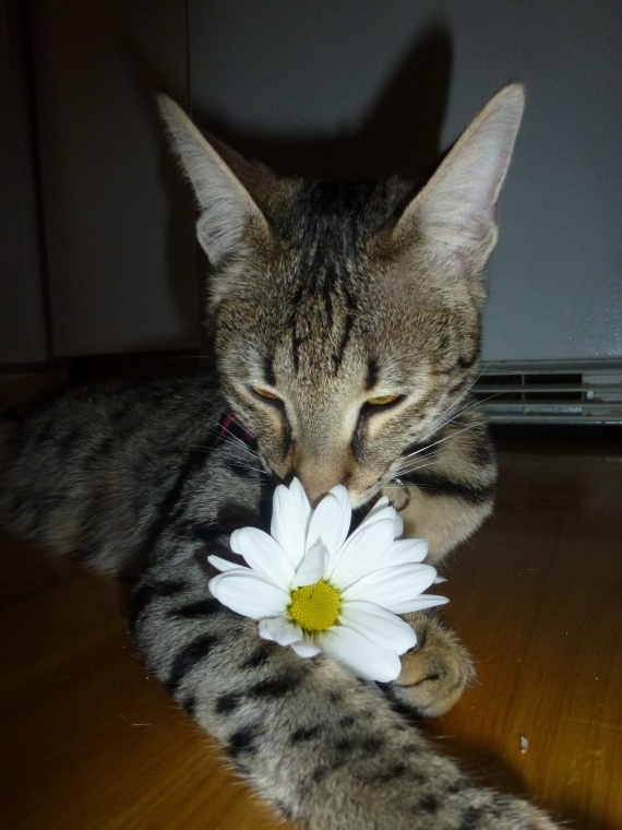 marguerit fleur2