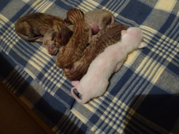 chatons jour 1