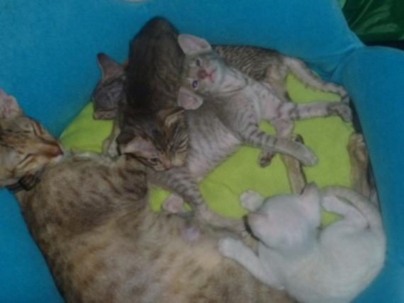 philo et chatons