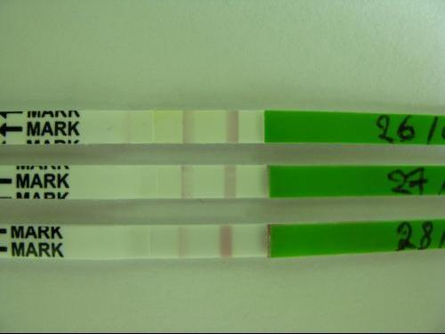 test ovulation ovulatest avis