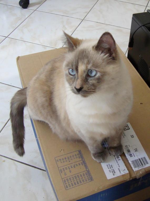 Lucette et son carton