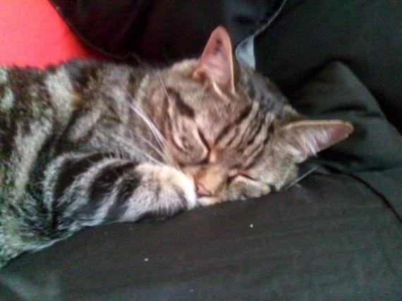 Léo sieste 2