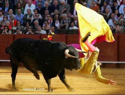 matador.bullfight.24