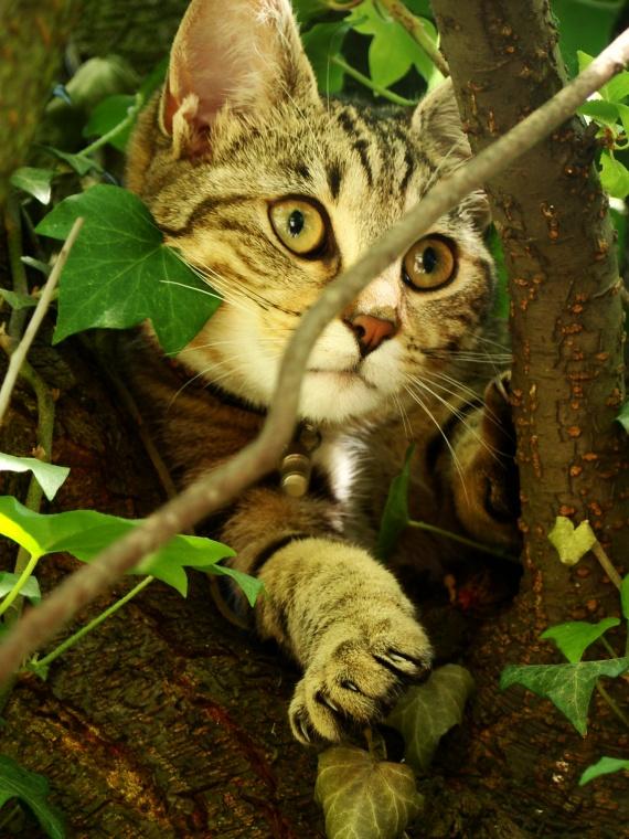Hannibale dans l'arbre