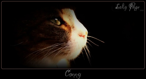conny - loly page
